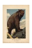 Cave Bear, Ursus Spelaeus, Extinct Species of Bear From the Pleistocene Giclee Print by F. John