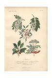 Black Locust Tree, Yellowwood Tree, Pink Spindle Tree, Holly, And Scarlet Rowan Tree Giclee Print by Edouard Maubert