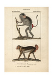 Hamadryas Baboon And Macaque From Frederic Cuvier's Dictionary of Natural Science: Mammals Giclee Print