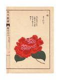 Crimson Camellia Susukage Giclee Print