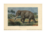 Elephas Imperator, An Extinct Giant Mammoth Now Classified As Mammuthus Imperator Giclee Print by Heinrich Harder