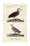 Albatross And Gull From Sainte-Croix's Dictionary of Natural Science: Ornithology Giclee Print