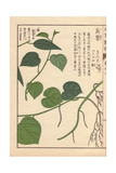 Leaves And Stems of Japanese Pepper Giclee Print