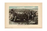 Saddle-backed Rodrigues Giant Tortoise, Cylindraspis Vosmaeri, Testudo Indica Vosmaer Giclee Print by F. John