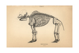 Fossil Skeleton of the Great Mastodon Giclee Print