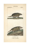 Armadillos From Frederic Cuvier's Dictionary of Natural Science: Mammals, Paris, 1816 Giclee Print