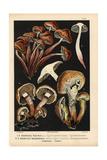 Spindleshank Fungus Giclee Print