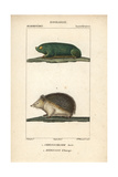 Golden Mole And Hedgehog From Frederic Cuvier's Dictionary of Natural Science: Mammals Giclee Print