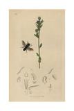 Heriades Truncorum Giclee Print