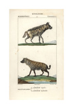 Hyenas From Frederic Cuvier's Dictionary of Natural Science: Mammals, Paris, 1816 Giclee Print