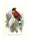 Mountain Trogon Giclee Print