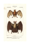 Greater Bulldog Bat, Noctilio Leporinus, And Greater Spear-nosed Bat, Phyllostomus Hastatus Giclee Print by Jean Gabriel Pretre