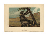 Megatherium Americanum, Extinct Genus of Giant Ground Sloths From the Pliocene Through Pleistocene Giclee Print by F. John