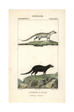 Genet And Water Mongoose From Frederic Cuvier's Dictionary of Natural Science: Mammals Giclee Print