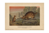 Horned Gopher, Ceratogaulus Hatcheri, Extinct Rodent From the Pleistocene Giclee Print by F. John