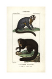 Night Monkey And Saki Monkey From Frederic Cuvier's Dictionary of Natural Science: Mammals Giclee Print