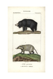 Sloth Bear And Hog Badger From Frederic Cuvier's Dictionary of Natural Science: Mammals Giclee Print