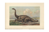 Diplodocus Is a Genus of Extinct Diplodocid Sauropod Dinosaur of the Late Jurassic Stampa giclée di Heinrich Harder