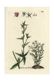 "Gromwell, Lithospermum Officinale, From Pierre Bulliard's ""Flora Parisiensis,"" 1776, Paris Giclee Print by Pierre Bulliard"