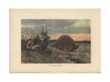 Primitive Men with Spears Hunting a Glyptodon, Large, Armored Mammal of the Family Glyptodontidae Giclee Print by Heinrich Harder