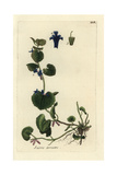 "Ground Ivy, Glechoma Hederacea, From Pierre Bulliard's ""Flora Parisiensis,"" 1776, Paris Giclee Print by Pierre Bulliard"