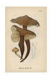 Spindle Stem, Agaricus Fusipes Giclee Print by Mordecai Cubitt Cooke