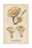 Satiny Mushroom, Agaricus Dealbatus 1, And Ivory Caps, Hygrophorus Virgineus 2 Giclee Print by Mordecai Cubitt Cooke