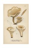 Satiny Mushroom, Agaricus Dealbatus 1, And Ivory Caps, Hygrophorus Virgineus 2 Giclee Print by Mordecai Cubitt Cooke