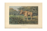 Sivatherium, An Extinct Genus of Giraffid That Ranged Throughout Africa To Southern Asia Stampa giclée di Heinrich Harder