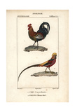 Jungle Fowl And Golden Pheasant From Sainte-Croix's Dictionary of Natural Science: Ornithology Reproduction procédé giclée