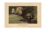 Dodo, Didus Ineptus Or Raphus Cucullatus Giclee Print by F. John