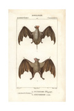 Egyptian Guano Bat And Red Fruit Bat From Frederic Cuvier's Dictionary of Natural Science: Mammals Giclee Print