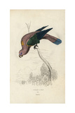 Chattering Lory Giclee Print