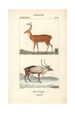 Virginia Deer And Reindeer From Frederic Cuvier's Dictionary of Natural Science: Mammals Giclee Print