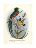 Resplendent Quetzal Giclee Print