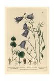 Round-leaved Bellflower, Campanula Rotundifolia, From Baxter's British Phaenogamous Botany, 1834 Giclee Print by William Delamotte