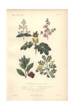 Deutzia, Almond Tree, Yellow Mahonia, Pink-flowered Strawberry Tree, And Yellow Coronilla Giclee Print by Edouard Maubert