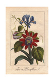 Blue Iris And Passionflower Giclee Print