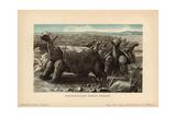 Saddle-backed Rodrigues Giant Tortoise Giclee Print