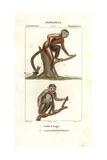 Tamarin Monkey, Saguinus Midas, And Squirrel Monkey, Saimiri Sciureus Giclee Print by Jean Gabriel Pretre