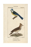Bluetit And Crested Lark From Sainte-Croix's Dictionary of Natural Science: Ornithology Reproduction procédé giclée