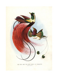 Red Bird-of-paradise Giclee Print