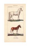 Horse, Equus Caballus, And Quagga, Equus Quagga Quagga, Extinct Giclee Print by Jean Gabriel Pretre