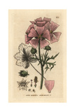Musk Mallow, Malva Moschata, From William Baxter's British Phaenogamous Botany, 1834 Giclee Print by Isaac Russell