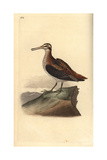 Jack Snipe From Edward Donovan's Natural History of British Birds, London, 1817 Impression giclée par Edward Donovan