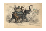 Indian Elephant Giclee Print