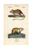 Gerbil And Hamster From Frederic Cuvier's Dictionary of Natural Science: Mammals, Paris, 1816 Giclee Print