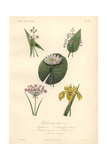 White Arrowhead, Plantain Lily, White Water Lily And Yellow Flag Iris Giclee Print by Edouard Maubert