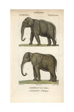 Indian And African Elephant From Frederic Cuvier's Dictionary of Natural Science: Mammals Giclee Print