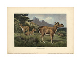 Protoceras, Extinct Genus of Artiodactyla, Endemic To North America Giclee Print by Heinrich Harder